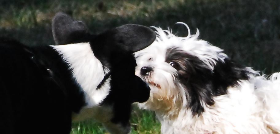 Gerechtigkeitssinn bei Hunden