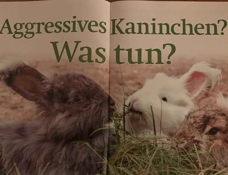 Leben mit Tieren Kaninchen
